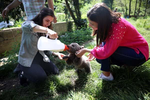 Trabzon'da bulunan 'Yogi' korumaya alındı