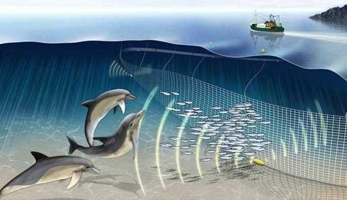 Karadeniz'de yunus ölümlerine Pingers çözümü