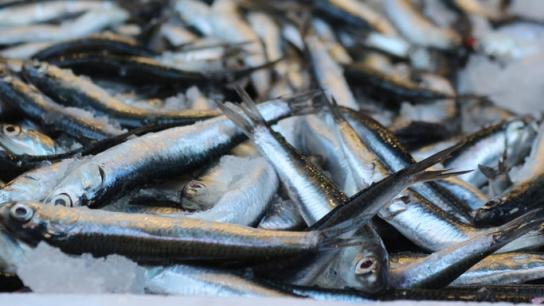 Kar yağdı balık fiyatları arttı!